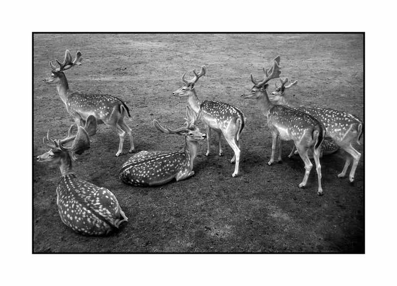 Group of Deers in Nature