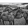 Horses Closeness