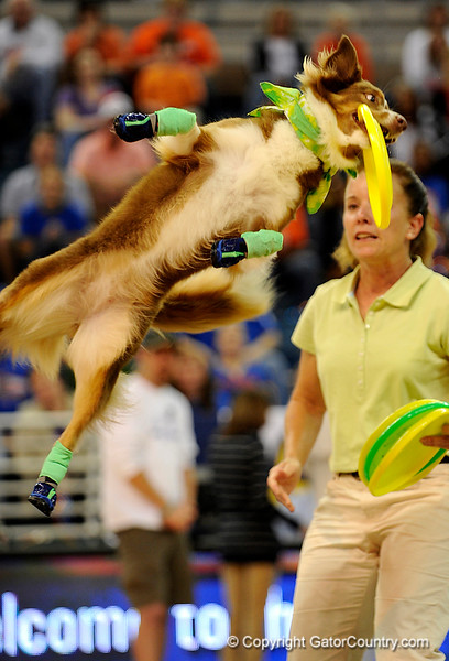 "(Casey Brooke Lawson / Gator Country) ""Flying Dogs"" preform during halftime of the Gators 82 to 64 victory over South Carolina on Sunday, February 22, 2009."