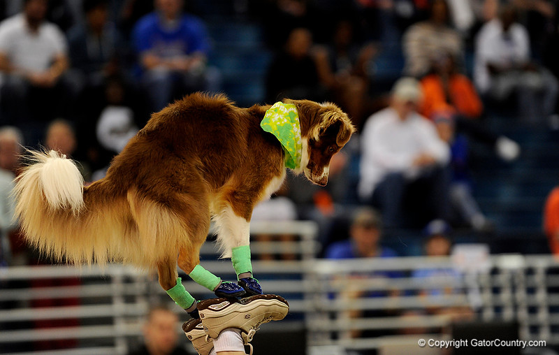 """(Casey Brooke Lawson / Gator Country) """"Flying Dogs"""" preform during halftime of the Gators 82 to 64 victory over South Carolina on Sunday, February 22, 2009."""