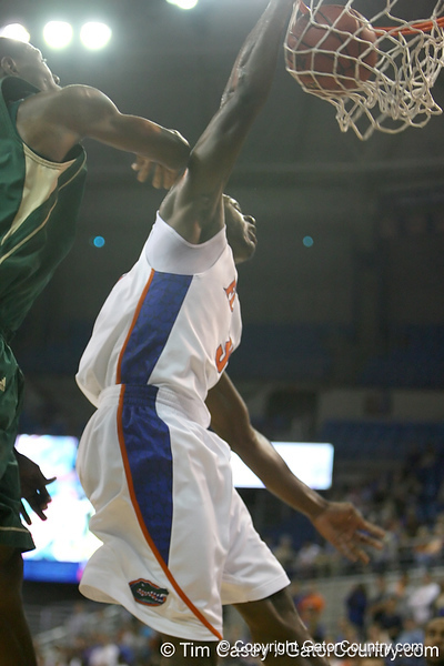Florida sophomore guard/forward Ray Shipman slams in two points during the Gators' 95-46 exhibition game win against the St. Leo Lions on Monday, November 2, 2009 at the Stephen C. O'Connell Center in Gainesville, Fla. / Gator Country photo by Tim Casey