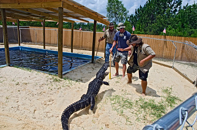 Gator trying to tell Jimmy, Paul and Trey that he did not want to do the show.