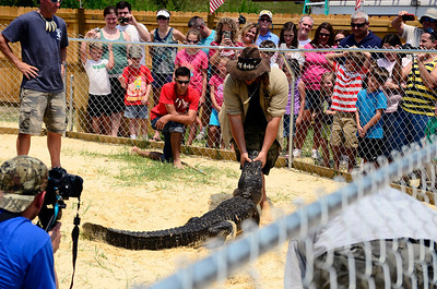 Jimmy holding the gator's mouth shut and getting him into position for the show.