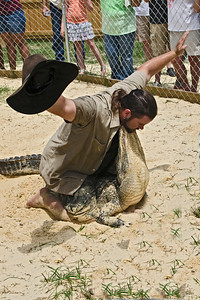 Jimmy demonstrating his control of the alligator.