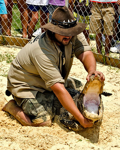 Jimmy letting everyone see the teeth and inside of the gator's mouth. They have forty teeth on the top and forty on the bottom for a total of eighty teeth.