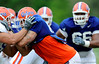 Aaron Hernandez makes as a block as the University of Florida football team holds their third Spring practice on Saturday, March 28, 2009 in Gainesville, Fla. / Gator Country photo by Staff