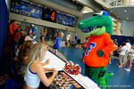 Albert chews on a couple of the Florida Gator cheerleader's pom poms during the 2014 Florida Gator Fan Day.  August 16th, 2014. Gator Country photo by David Bowie.
