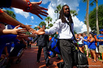 The Florida Gators march into Ben Hill Griffin Stadium greeting the Florida fans before the start of the game versus the Idaho Vandals.   Florida Gators vs Idaho Vandals.  August 30th, 2014. Gator Country photo by David Bowie.