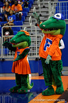 Albert and Alberta do the gator chomp as the Florida Gators volleyball team is introduced.  Florida Gators Volleyball vs Mississippi State Bulldogs.  October 26th, 2014. Gator Country photo by David Bowie.