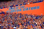 Home of the Florida Gators.  Florida Gators vs South Carolina Gamecocks.  November 14th, 2014. Gator Country photo by David Bowie.