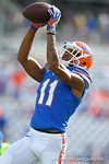 Florida Gators wide receiver Demarcus Robinson leaps into the air for a catch during pre-game warm ups as the Univeristy of Florida Gators and the University of Michigan Wolverines square off in the 2016 Buffalo Wild Wings Citrus Bowl.  Orlando, Fl.  January 1st, 2015. Gator Country photo by David Bowie.