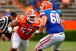 Florida Gators defensive lineman Caleb Brantley bull rushes Florida Gators offensive lineman Zach Shinn during the 2015 Orange and Blue Debut.  April 11th 2015. Gator Country photo by David Bowie.