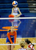 UF Freshman Cindy Bathelt prepares to hit the ball during the first set over Alabama. The Gators clinched their last home game with a 3-0 win over the Crimson Tide at the O'Connell Center on Saturday, November 23, 2008. (Casey Brooke Lawson / Gator Country)