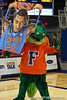 Florida mascot Albert holds up a sign of sophomore guard/forward Casey Prather during the Gators' 114-57 win over the Catholic Cardinals on Thursday, November 3, 2011 at the Steven C. O'Connell Center in Gainesville, Fla./Gator Country photo by Rob Foldy