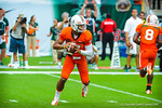 QB Stephen Morris looks downfield for an open receiver.  Gators vs Miami.  9-07-13.