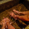 Sally and Shannon getting a little spa time in while Gavin and I ride around the island