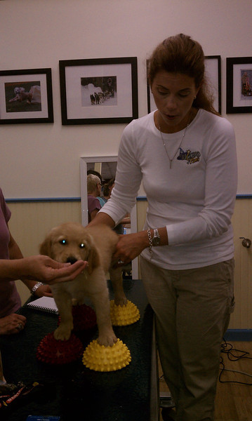 Dr. Debbie Gross Saunders working with Brew (Ms. Yellow)