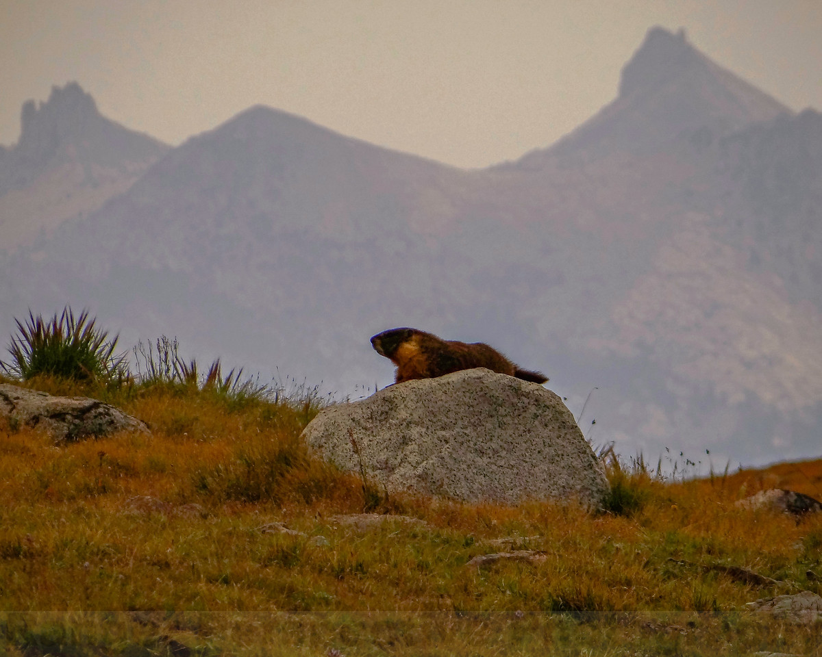Marmot and the Cathedral Range