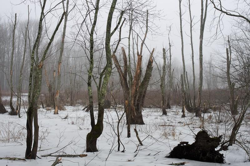 Concord River in Winter