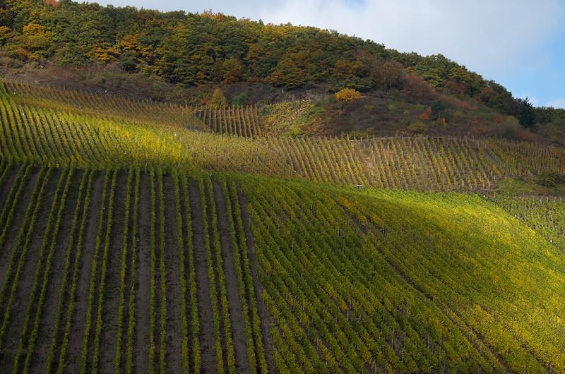Rhine Vineyards