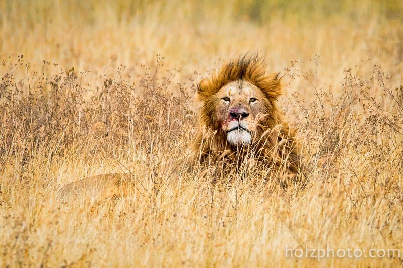 IMAGE: http://www.holzphotoclient.com/Gear/200-400/i-tTxhfXJ/0/L/AI3Q0441-L.jpg