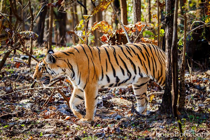 IMAGE: http://www.holzphotoclient.com/Gear/India-200-400-w-int/i-6fRKtVg/0/L/AI3Q6630-L.jpg