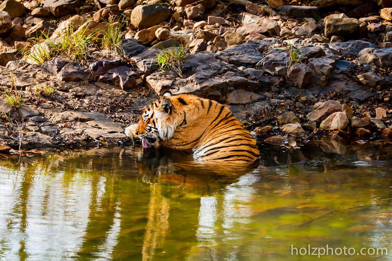 IMAGE: http://www.holzphotoclient.com/Gear/India-200-400/i-NQ56vJ5/0/L/AI3Q4938-L.jpg