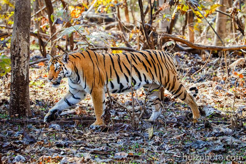 IMAGE: http://www.holzphotoclient.com/Gear/India-200-400/i-w55Mx3H/0/L/AI3Q6649-L.jpg