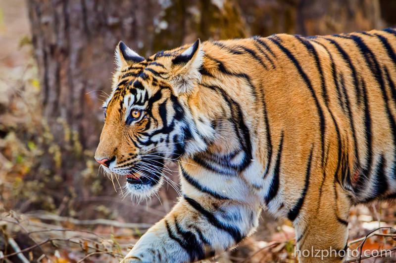 IMAGE: http://www.holzphotoclient.com/Gear/India-600-w-2x/i-7wT2V5p/0/L/IMG_4884-L.jpg