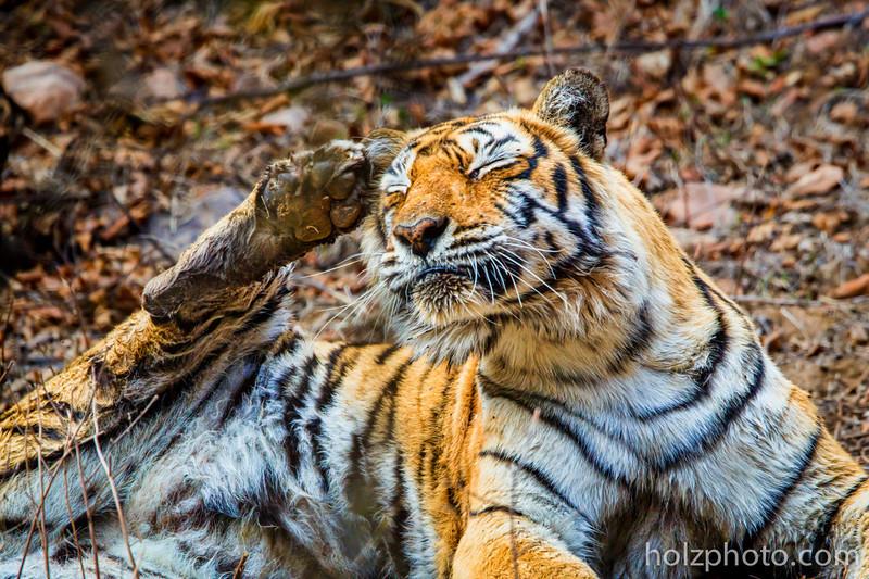 IMAGE: http://www.holzphotoclient.com/Gear/India-600-w-2x/i-ZhfGCVB/0/L/IMG_3489-L.jpg