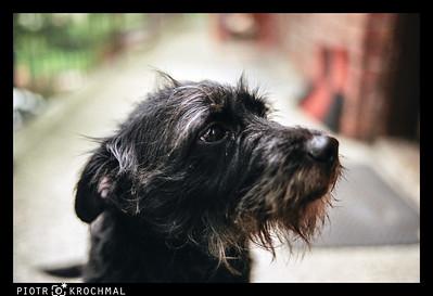 Sonia, 1/250; 2012-07-22; Pentax SuperA; SMC50@1.2;