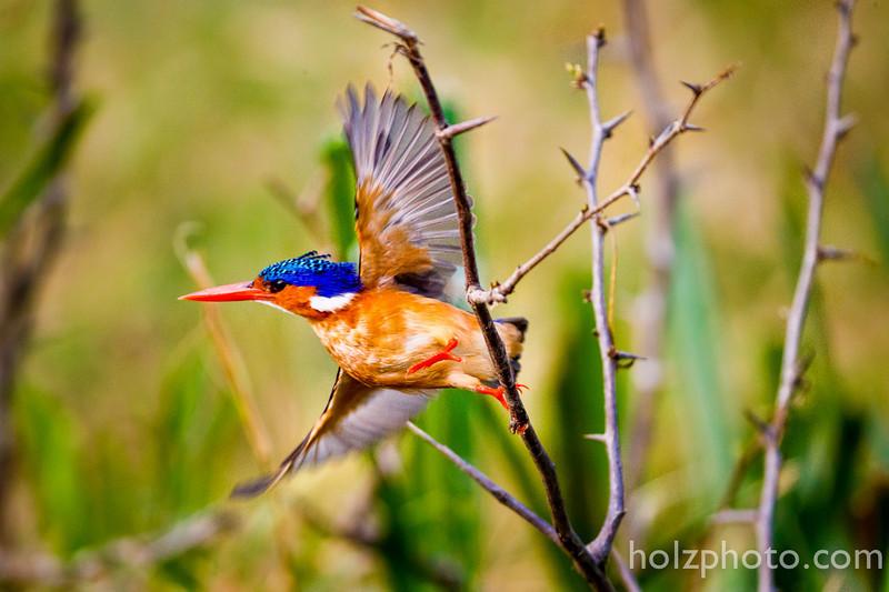 IMAGE: http://www.holzphotoclient.com/Gear/africa/i-3BpzxBx/0/L/AI3Q4902-L.jpg