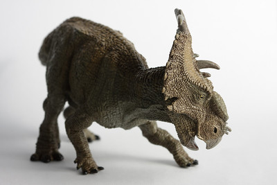 A small toy pachyrhinosaurus, made by Papo.
