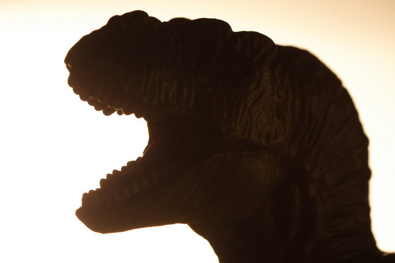 Tyrannosaurus at dawn. The model is a Safari Ltd. green tyrannosaur.
