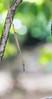 Closeup of Sony GM bokeh @ f/2.8