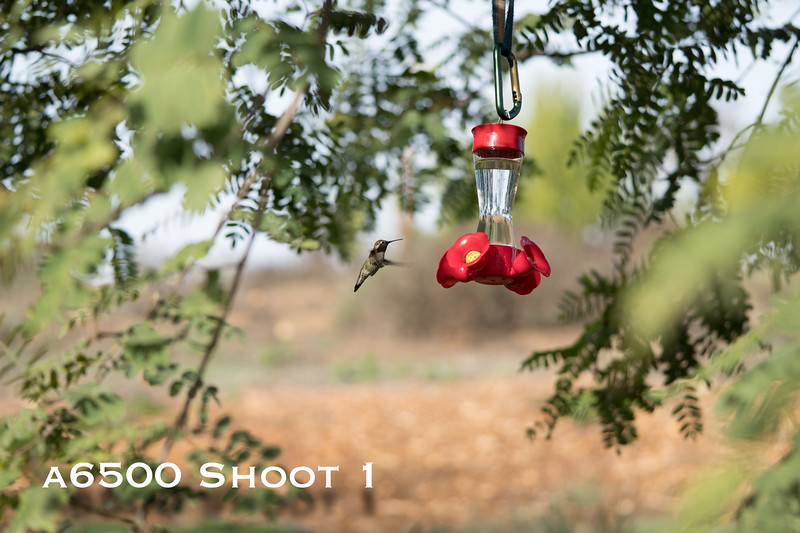 a6500 macro - Shoot 1-11.jpg