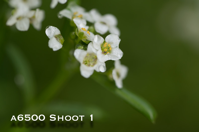 a6500 macro - Shoot 1-20.jpg
