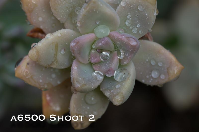 a6500 macro - Shoot 2-5.jpg