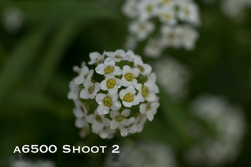 a6500 macro - Shoot 2-3.jpg