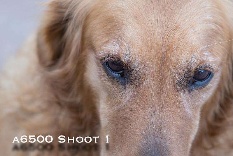 a6500 macro - Shoot 1-4.jpg