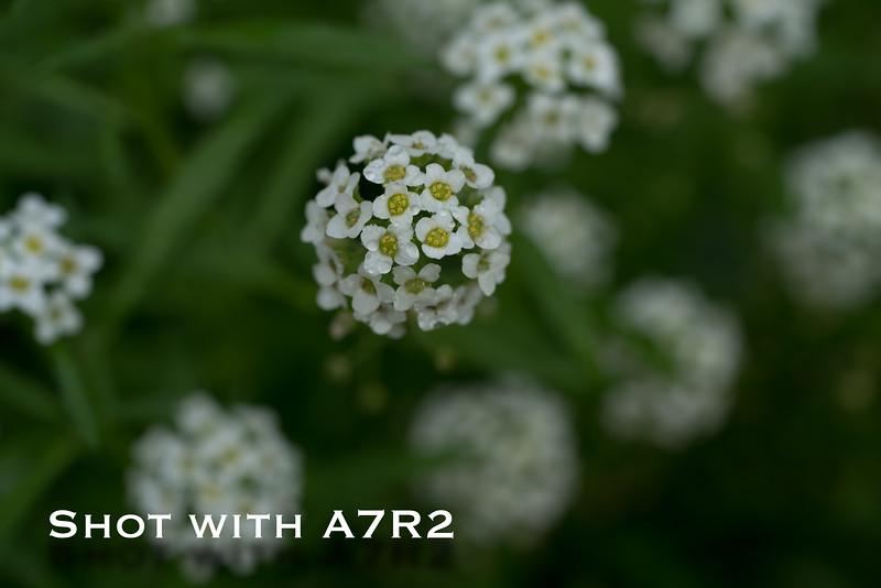 A7R2 Macro Comparison-1.jpg