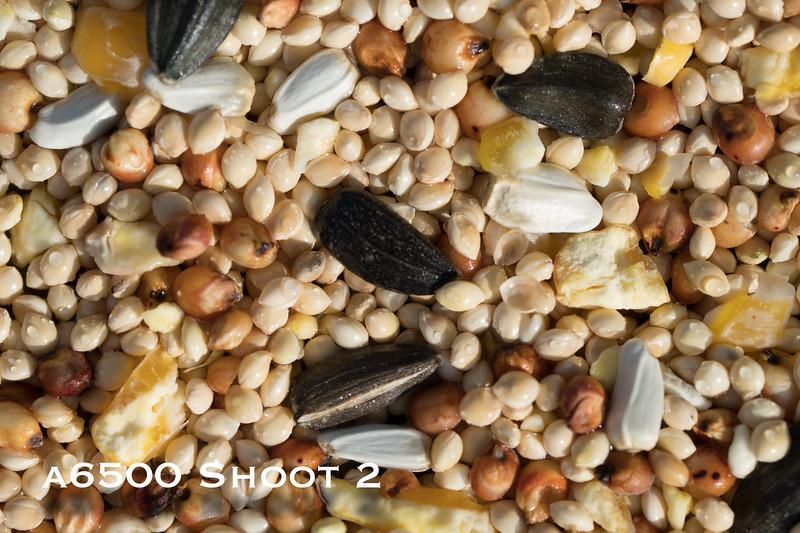a6500 macro - Shoot 2-9.jpg