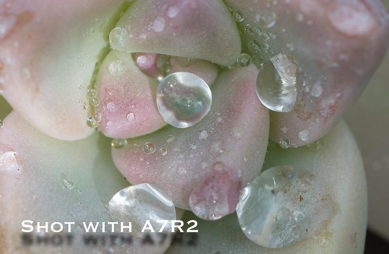 A7R2 Macro Comparison-6.jpg