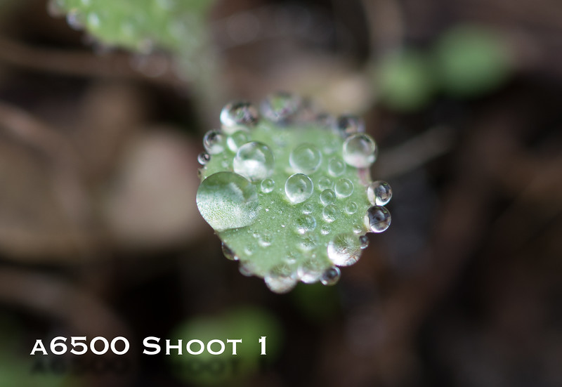 a6500 macro - Shoot 1-13.jpg