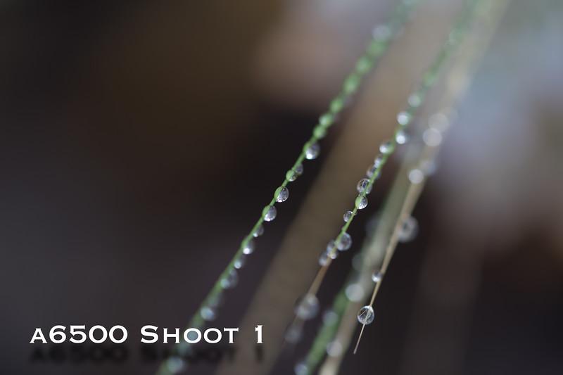 a6500 macro - Shoot 1-16.jpg