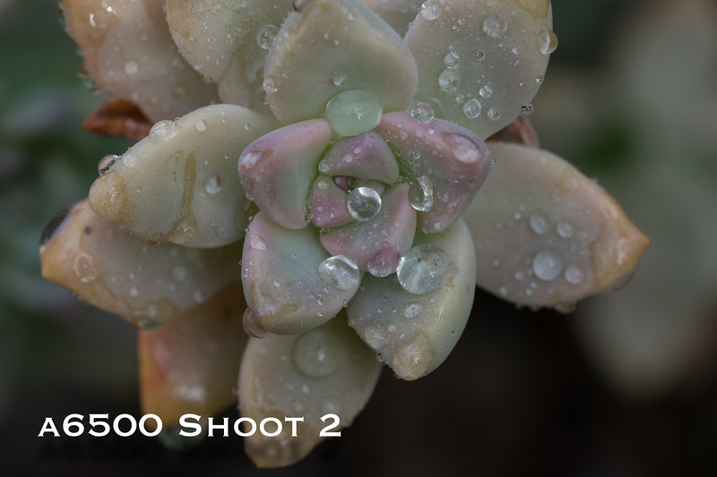 a6500 macro - Shoot 2-7.jpg