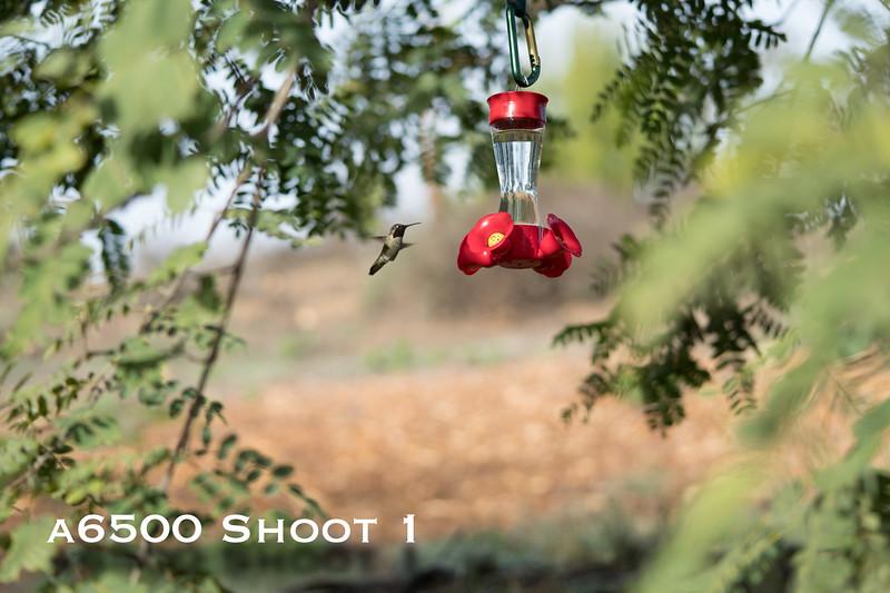 a6500 macro - Shoot 1-6.jpg