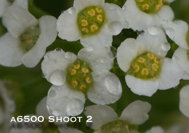 a6500 macro - Shoot 2-2.jpg
