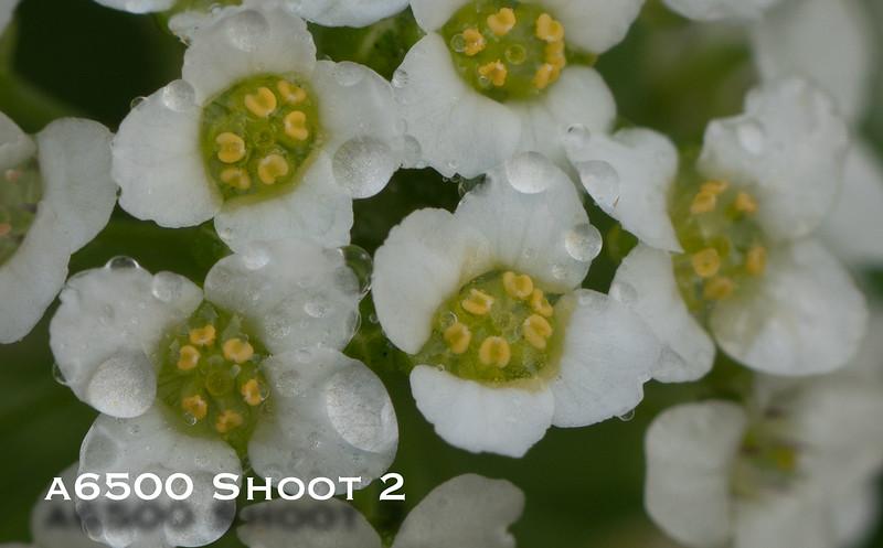 a6500 macro - Shoot 2-4.jpg