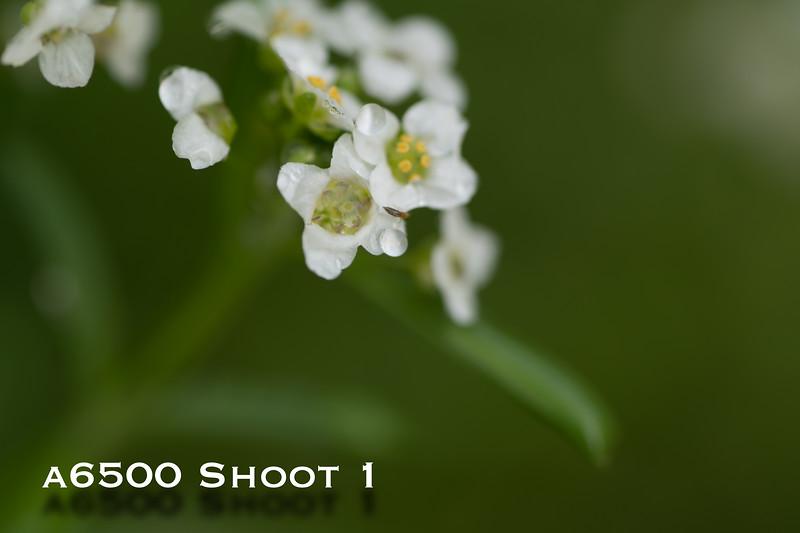 a6500 macro - Shoot 1-21.jpg